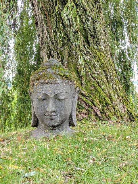 Buddhakopf vor Baum