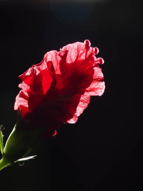 ganze Blüte